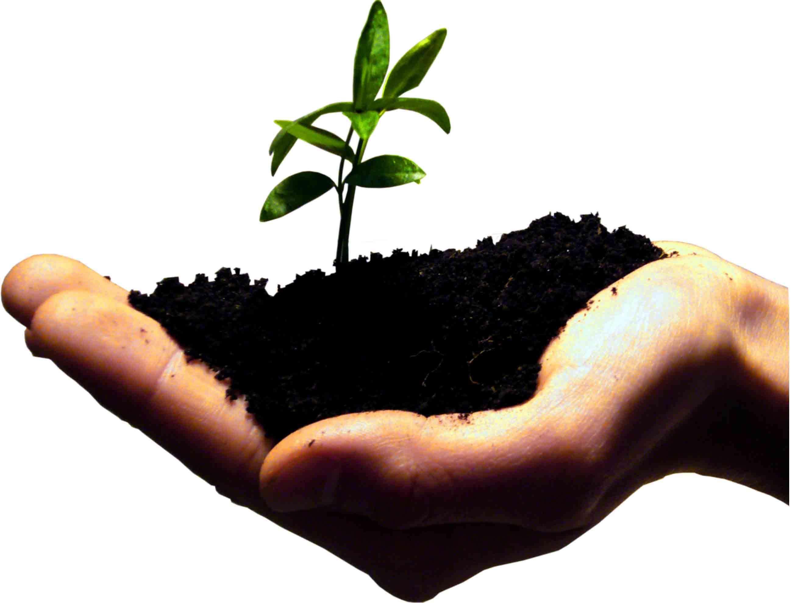 generousity_plant_grow